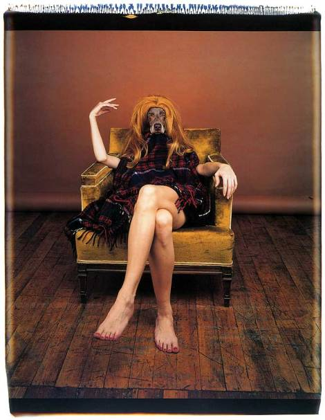 williamWegman (5)