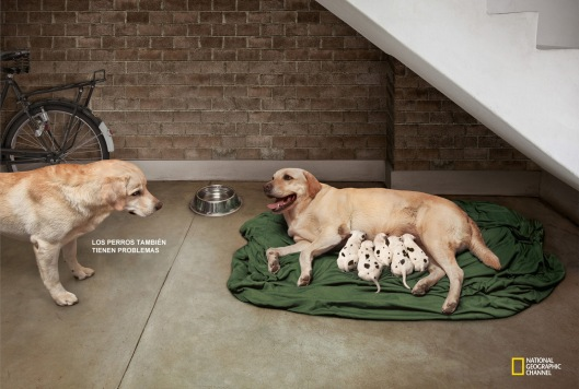 national-geographic-dogs-have-issues-too-wrong-father-best-print-ads