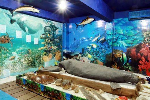 Museo-de-la-Naturaleza_aa1a7b7ad225adde1969a0a955bc9d7ab800ff46