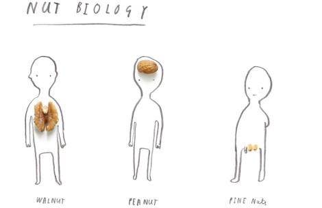 nut_biology_web-3-1