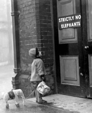 strictly-no-elephants